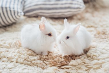 nice rabbits with pillows
