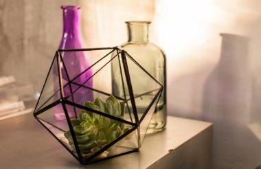 succulent plant in terrarium
