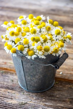 Heap of chamomile flowers