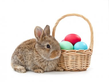 Rabbit and Easter basket