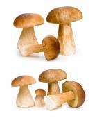 Hnědá syrové houby
