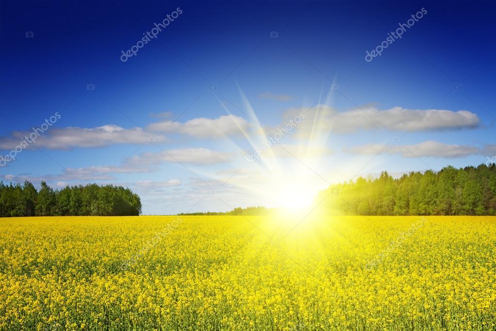 Sunny field landscape