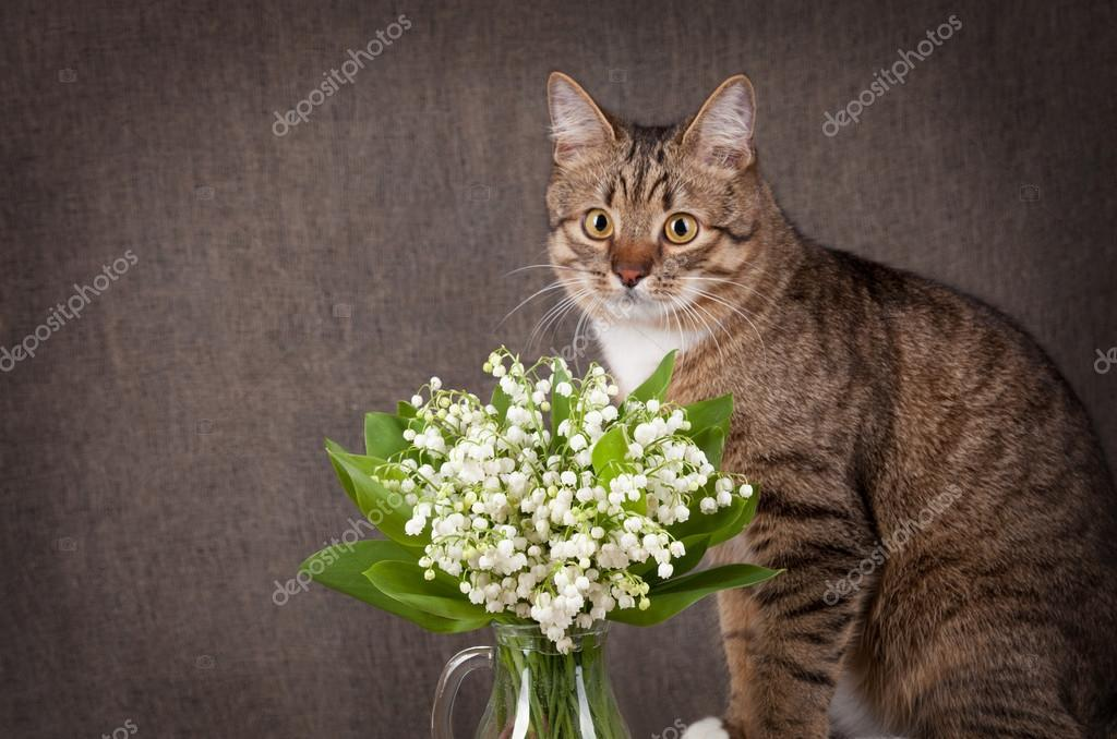 funny concept. Cat and bouquet of lilies of the valley