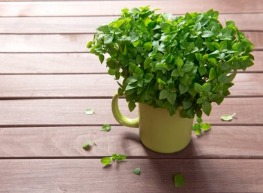 Fresh basil on a wooden background