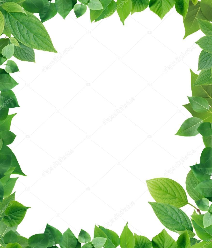 marco de hojas verde — Foto de stock © kvkirillov #111665156