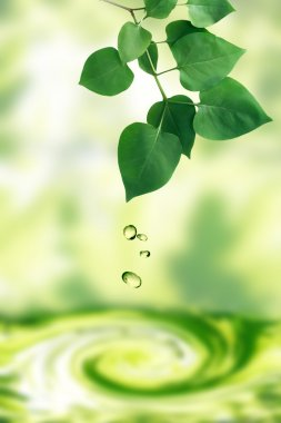Water drops falling from freshness green leaves. Nature background stock vector