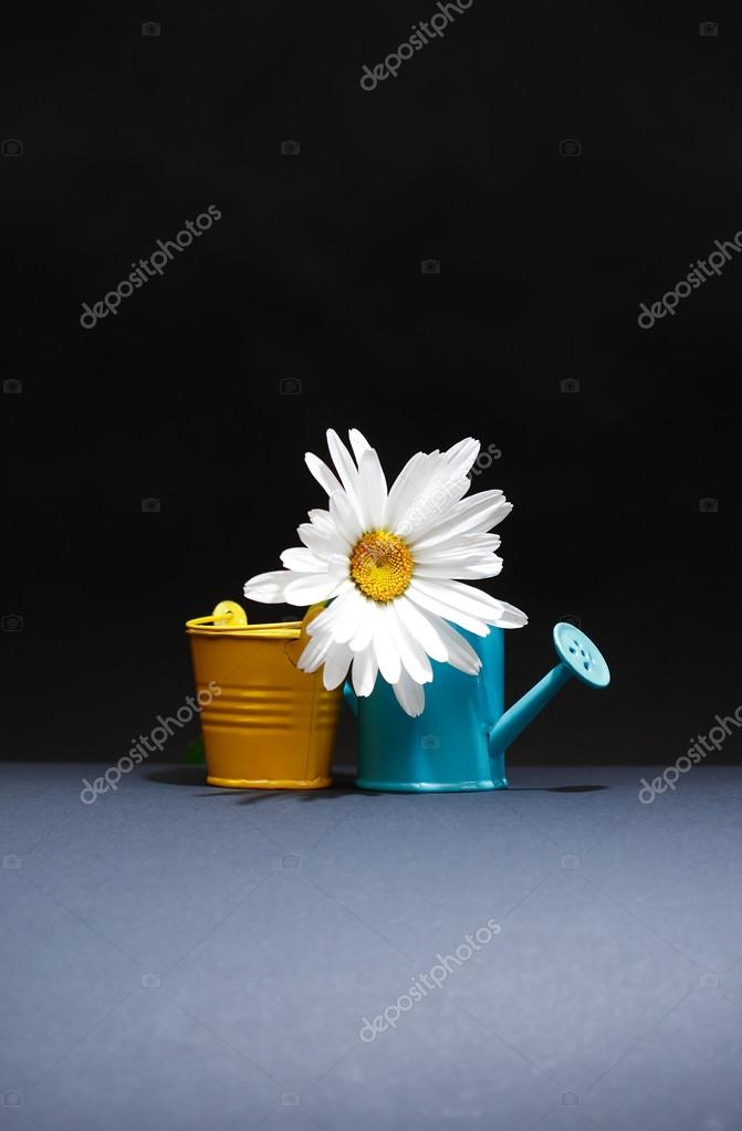 Watering Can And Bucket Near Flower