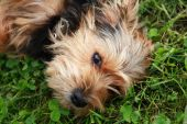 pes na trávě