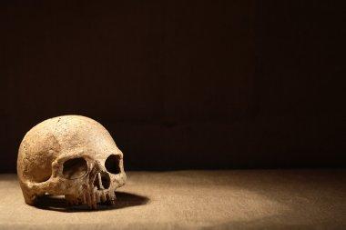 Human skull on canvas against dark background stock vector