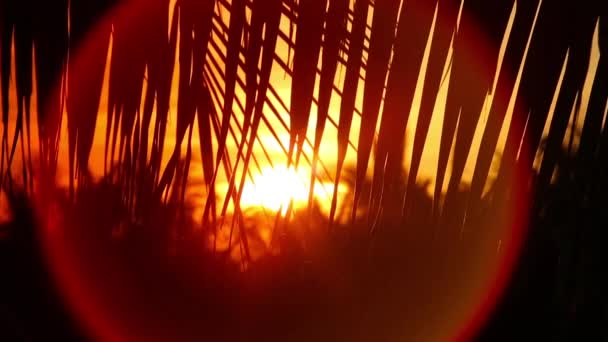Sunset through palm leaf silhouette