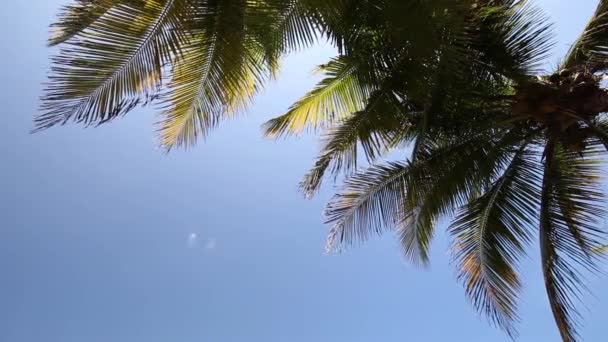 Top of coconut palm tree on  sky background
