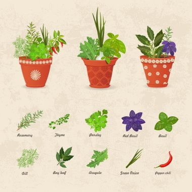 collection of herbs planted in pots