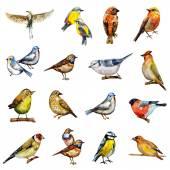 Collezione di uccelli dellacquerello