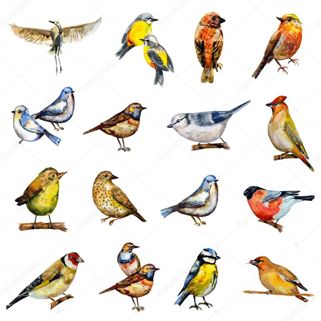 Collection of watercolor birds