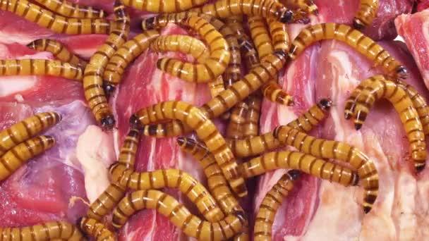 Červivé rozmazlené hovězí steak, ošklivý nezdravé jídlo koncept