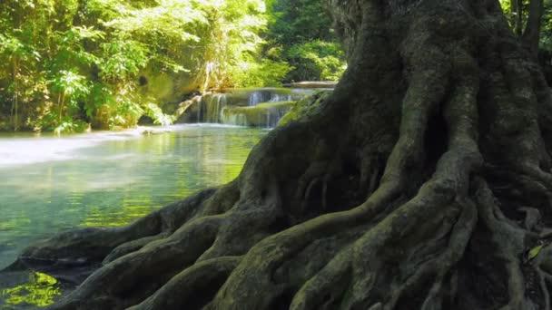 kmen stromu s širokou kořeny mělké řeky