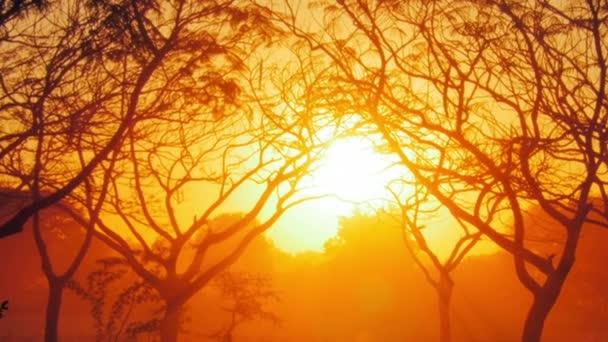 Sluneční paprsky zářící skrze větve stromů