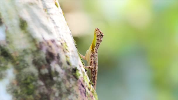 Tree lizard on trunk