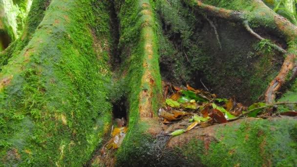 Kmen stromu, mechem a velké