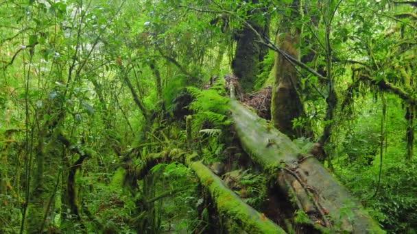 Sytě zelený mechový Les