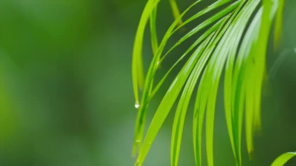 Rain sprej nad zelené rostliny