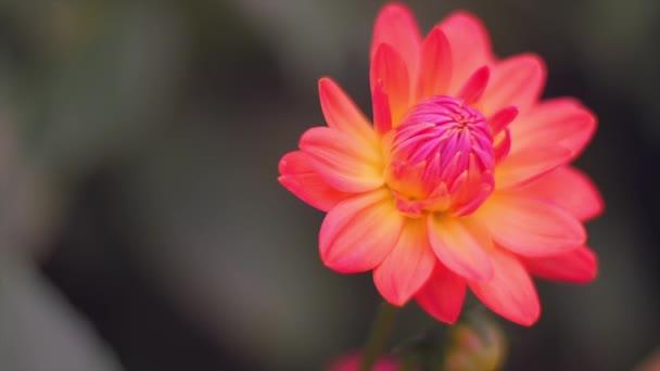 beautiful flower blossom