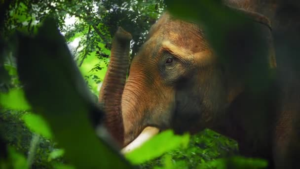 Elephant in jungle rain forest