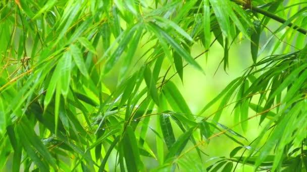 listy z bambusu v počátku tropického deště