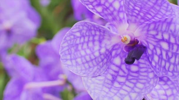 lila orchidea virág