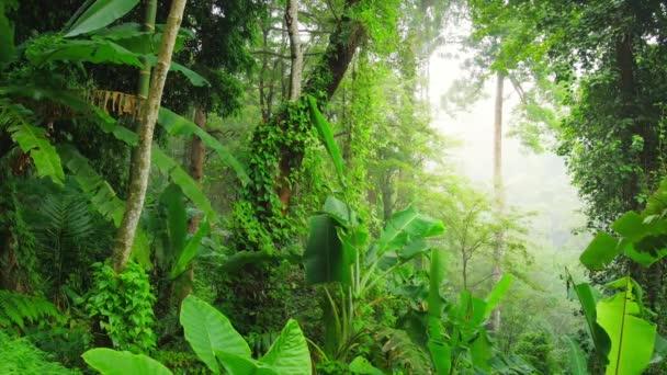 Tiefgrüner Wald