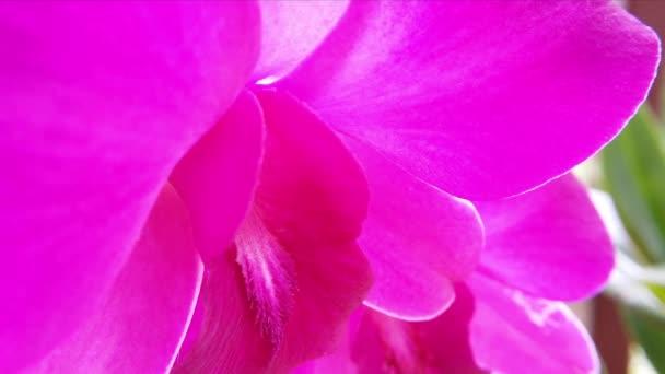 Virágzó orchidea virág
