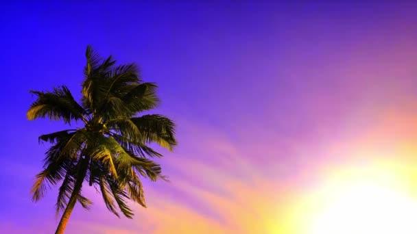 Palma při západu slunce
