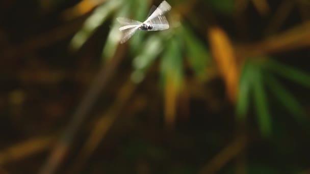 Zár megjelöl kilátás szitakötő rovar