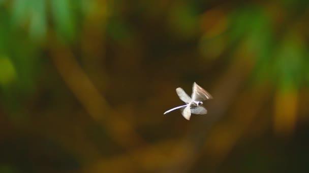 Nahaufnahme von Libelleninsekt