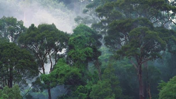 Hohe Luftfeuchtigkeit im Dschungel.