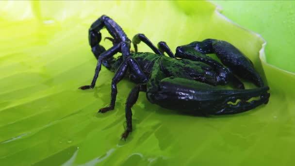 Scorpion na zelený list