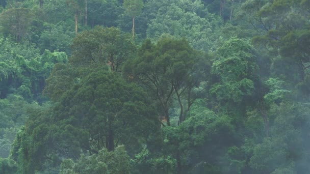 Tropický dešťová mlha a mlha nad zeleným kopcem