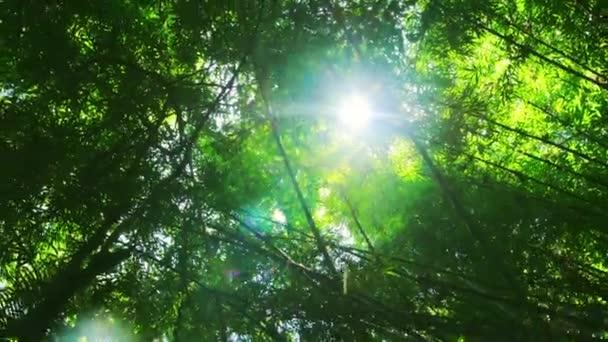 bambusz trópusi erdő
