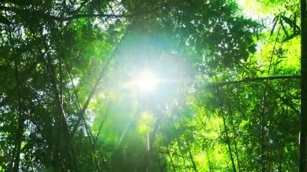 tropický prales bambus