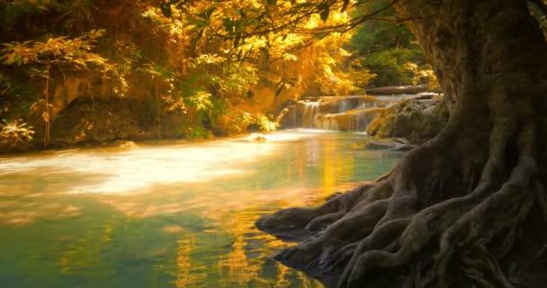 tropický prales s velký starý kmen stromu