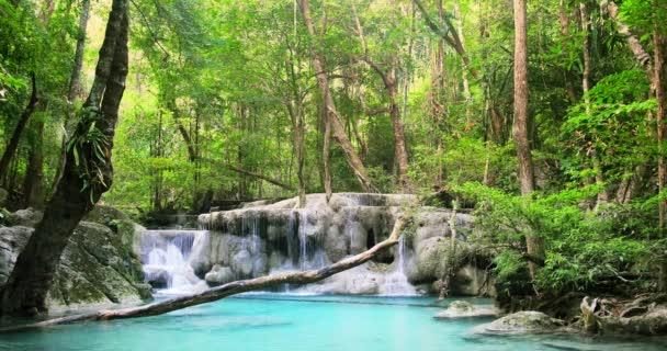Divočina tropického deštného pralesa