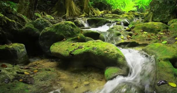 proud vody tekoucí přes Les