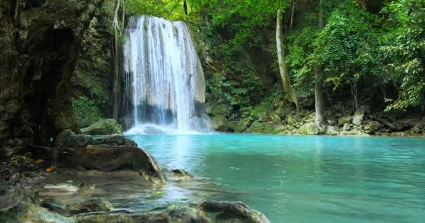 Úžasná povaha stálezelených deštných pralesů.