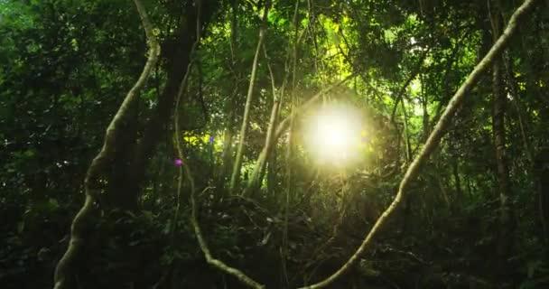 Sluneční paprsky prosvítá skrz stromy