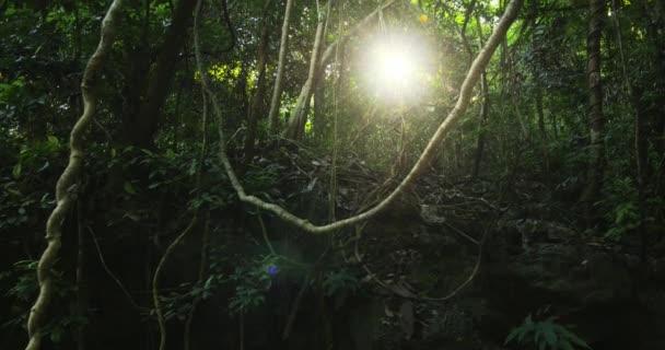 dichten Dschungel Wald Hintergrund.
