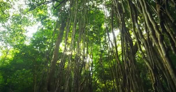 Sluneční světlo prosvítá skrz baldachýn deštného pralesa