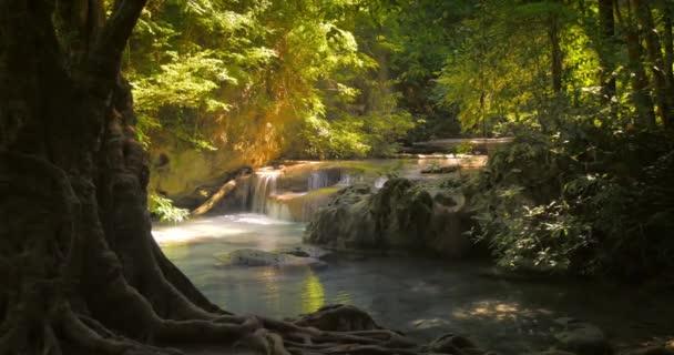 Sluneční den v tropickém lese