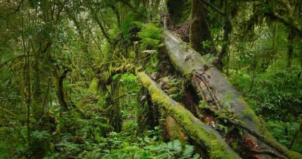 staré stromy, které Moss