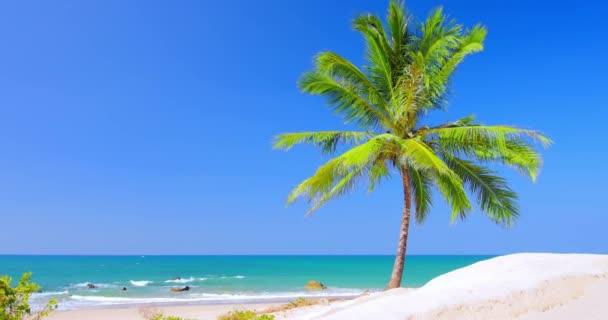 sandy beach with palm tree
