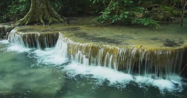Klares Wasser fällt von kleinem Wasserfall